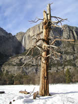 Yosemite Falls Jan 14 2004 NPS photo: