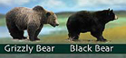 nps drawing bears: drawing of a black bear and a grizzly for comparison