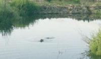 smaller version beaver lodge: