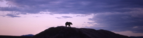 nps photo bear on horizon: