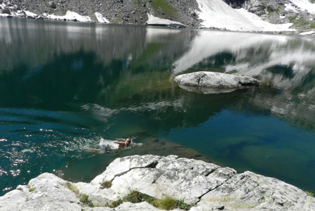 photo by Peter Ye Ethan Wilkie swimming in Lake Solitude: man swimming in a mountain lake