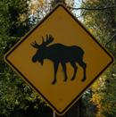 sign moose emblem:
