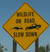 sign wildlife on road slow down: