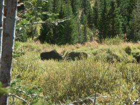 two moose by Sylvia Gallegos: