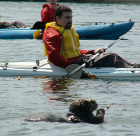 telephoto Alexander Verne and sea otter:
