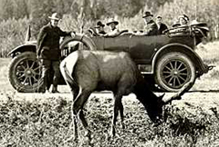 NPS historic photo collection road trip and elk: