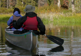 canoeists see moose on island: