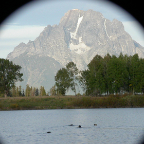 otters and Mount Moran: