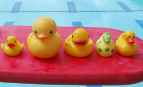 rubber ducky line of sight.: five rubber ducks on a kickboard
