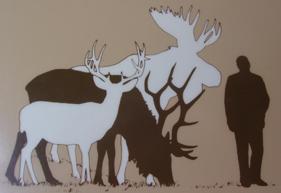 deer-elk-moose-and-man-size-comparison-display-at-forest-service-visitor-center.
