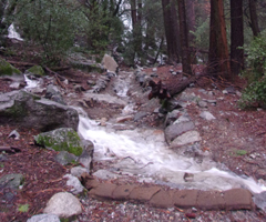 water flowing in a trail during rainstorm