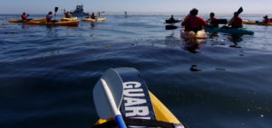 kayakers, standup paddleboarder and otter