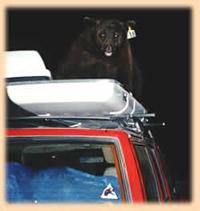 bear in storage pod on Jeep roof: