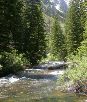 Cascade Creek just up into the canyon: