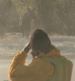 Daniel Krohn photographing moose: