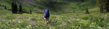 NPS photo backpacker in Death Canyon: