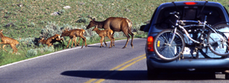 NPS photo minivan and elk family: