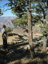 NPS tree struck by lightning: