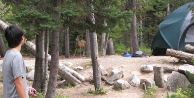 Peter Ye and deer in campsite: man, deer and six-person tent in a wooded campsite