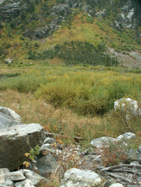 Pika's home at edge of rockfield Grand Teton park Sept. 2006: