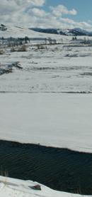 Yellowstone winter 2007 soda butte creek ouzel: