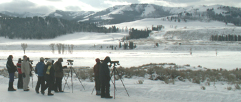 Yellowstone winter wolf watchers Lamar valley buffalo ranch: