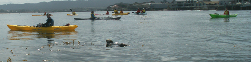 baby otter and kayakers 2006: