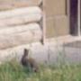 bunny outside cabin:
