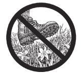 don't be a meadow stomper NPS drawing: drawing of a boot over tiny flowering plants