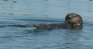 first otter we spotted 2006: