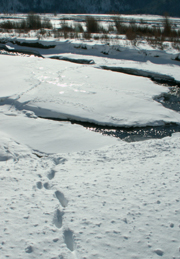 footprints in snow cross creek and ice bridge:
