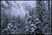 forest, cliffs with snow near Vernal Falls QTL: