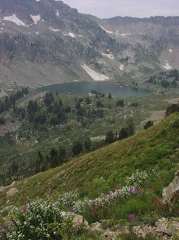lake solitude wildflowers nps photo: lake, mountain and wildflowers
