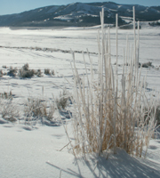 long shot of Lamar valley yellowstone winter: