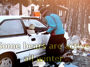 man folding car door back into place: man folding car door back into place after a bear broke into his car