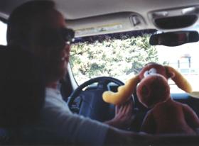 moose driving: