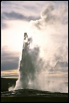 old faithful terragalleria:
