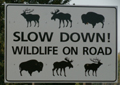 sign slow down wildlife on road: