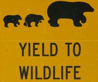 sign yield to wildilfe bears drawing: