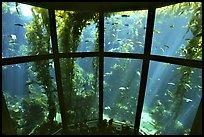 terragalleria kelp exhibit Monterey aquarium: