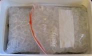 zip lock bags of ice: two large zip lock bags of ice cover the top layer of an ice chest