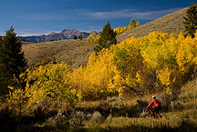 mountian biking in the tetons by Ron Niebrugge: mountian biker on a trail in Grand teton park, used with permission from the photographer, Ron Niebrugge