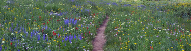 NPS photo Grand teton trail thick with wildflowers: