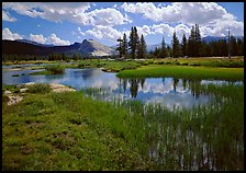 Spring pond in Tuolumne Meadows and Lambert Dome by Quang-Tuan Luong: