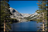 Tenaya Lake framed by trees by Quang-Tuan Luong: Tenaya Lake framed by trees photo by Quang-Tuan Luong used with permission