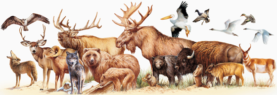 NPS photo Yellowstone wildlife montage Robert Hynes 560 pxls: