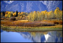 fall Oxbow Bend QTL: