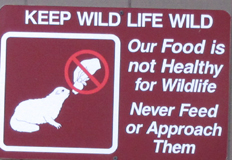 sign keep wildlife wild: a sign that says keep wildlife wild, our food is not healthy for wildlife, never approach or feed them
