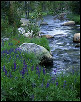 lupine and stream by Quang-Tuan Luong: