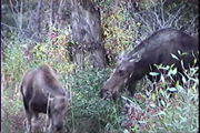 moose and mom 4.: